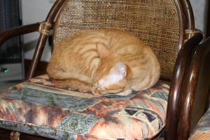 籐椅子で寝るみい