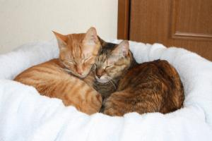 仲良く寝る2匹