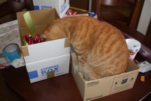箱に入りたいみい