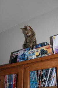 にいの本棚の上のくう