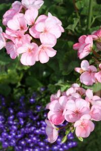 くさいけどきれいな花