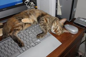 パソコンの邪魔くう2