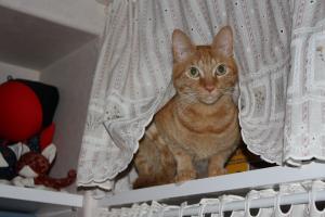 棚のカーテンから覗くみい