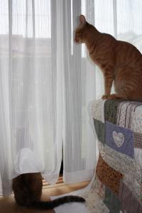 外を見る2匹&ケット