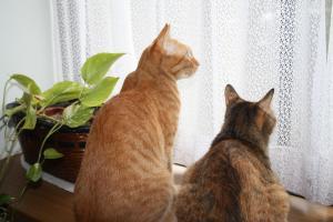 窓辺で仲良し