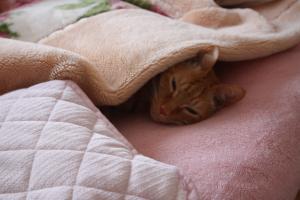 眠い~みい
