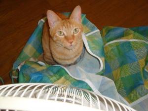 扇風機の袋にみい