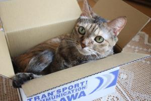 箱入り娘猫