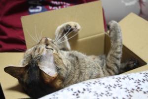 箱の中からにいと遊ぶ