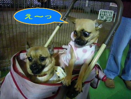 ち~ちゃん&ピピちゃん