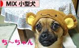 「日本ブログ村 犬ブログ MIX小型犬へ」