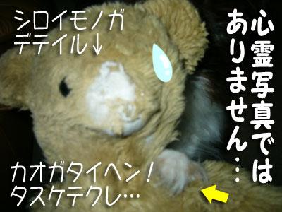 kuma-mikan001.jpg