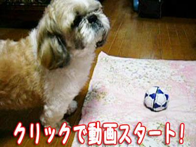 lucky0032.jpg