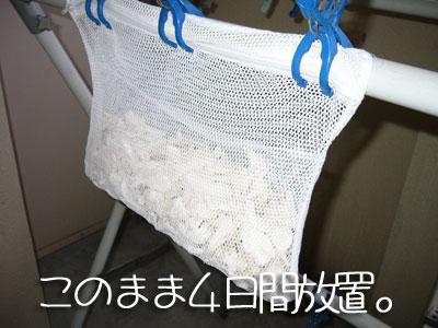 maitake06.jpg