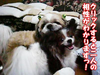 mikan-lucky46.jpg