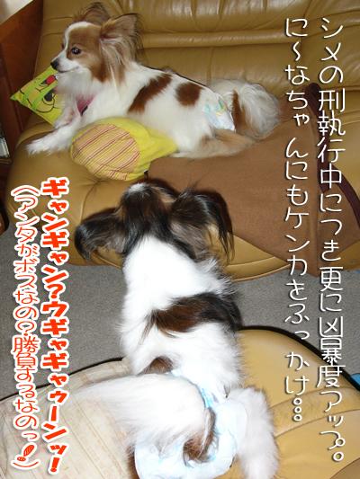 mikan-ninachan01.jpg