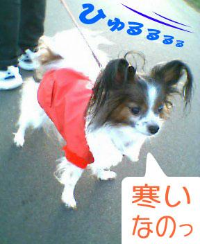 mikan0046.jpg