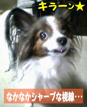 mikan0056.jpg