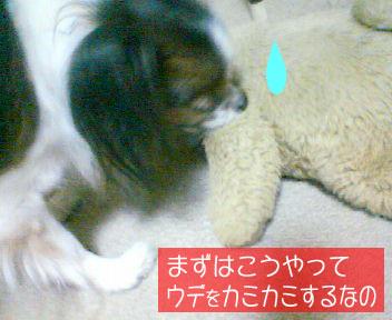 mikan0079.jpg