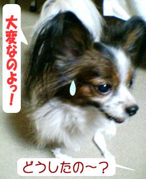 mikan0098.jpg