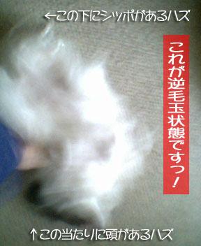 mikan0121.jpg
