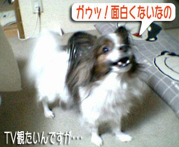 mikan0143.jpg