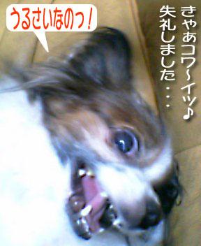 mikan0154.jpg