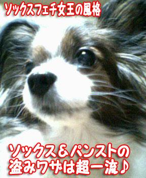 mikan0176.jpg