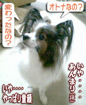mikan0226.jpg