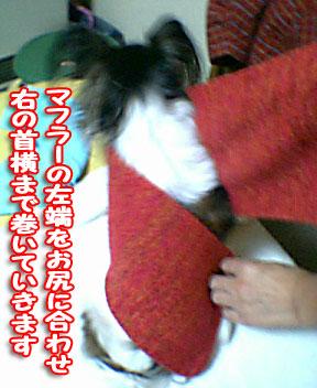 mikan0232.jpg
