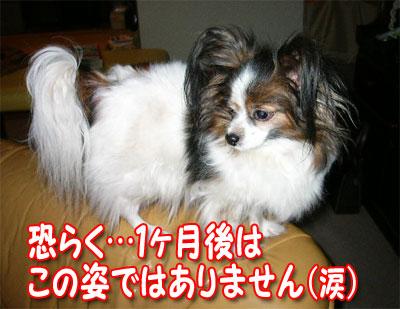 mikan0421.jpg