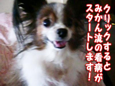 mikan0465.jpg