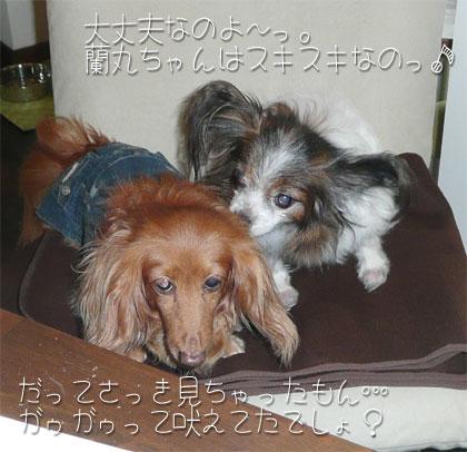 ranmaru-mikan02.jpg