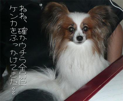 rizuchan.jpg