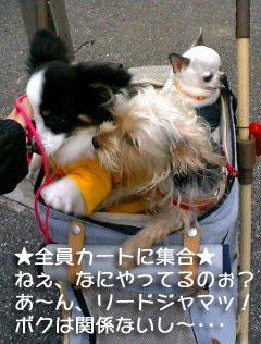 shuugou01.jpg