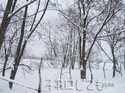 yukigeshiki01.jpg