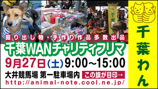 chibawan_freemarket320x180.jpg