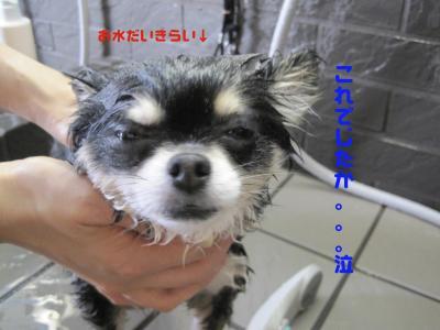 miku2_convert_20090726131435.jpeg