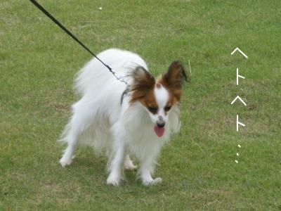 snap_milk522_200986231348.jpg