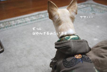 01_20090115224154.jpg
