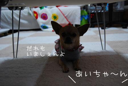 01_20090419123728.jpg