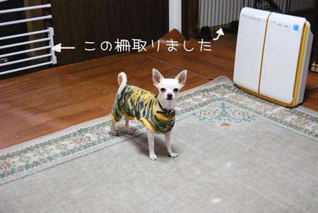 01_20090614123236.jpg