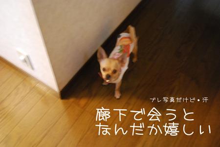01_20090616191154.jpg