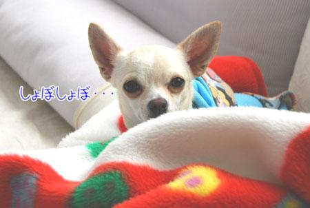 02_20090108150322.jpg