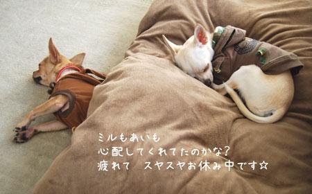 02_20090117154849.jpg