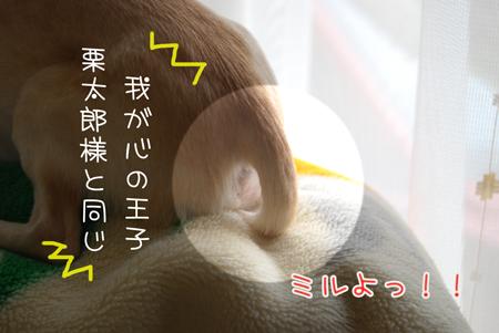 02_20090625220518.jpg