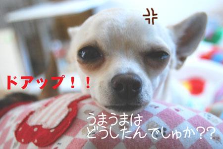 03_20081228195322.jpg