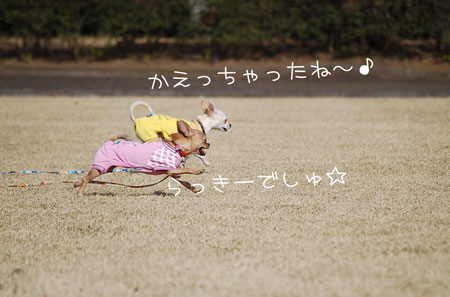 03_20090405203010.jpg