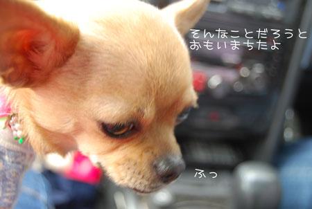 03_20090427192409.jpg