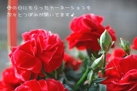 03_20090521210717.jpg